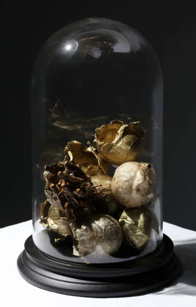 Ambivalence - Transience (locusts, paper balls, yellow gold leaf, bell jar), 32 x 21cm