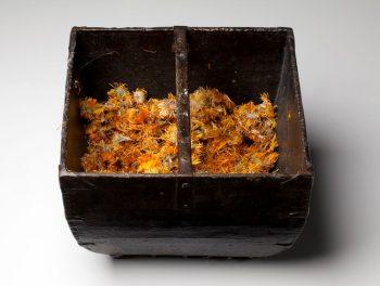 Offerendos - Marigolds